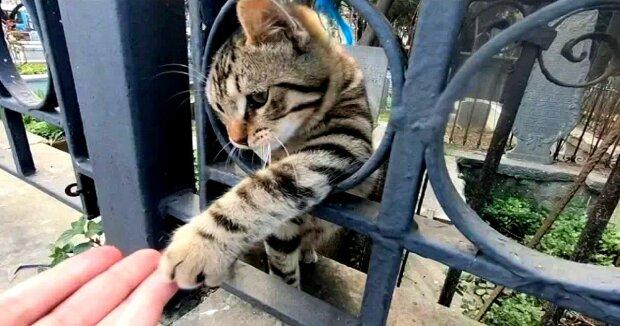 Screenshot: YouTube / meow meow