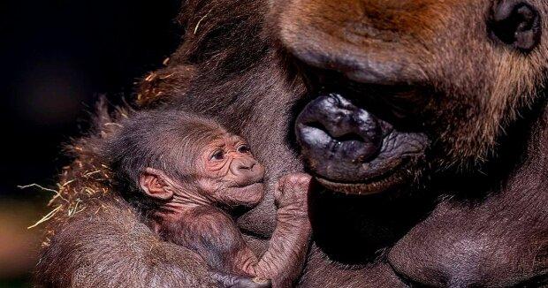 Screenshot: YouTube / San Diego Zoo Safari Park