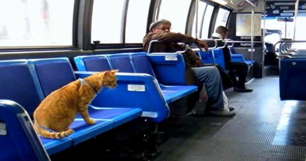 Screenshot: YouTube / Subway Tabby