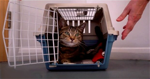 Screenshot: YouTube / Removing a cat from the carrier