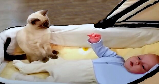 Screenshot: YouTube / Animals Doing Things - Funny & Cute Dogs and Cats