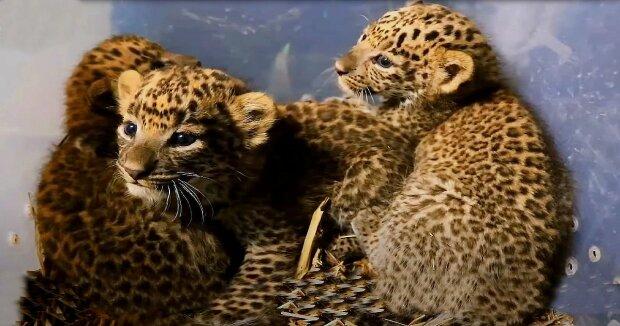 Screenshot: YouTube / Wildlife SOS