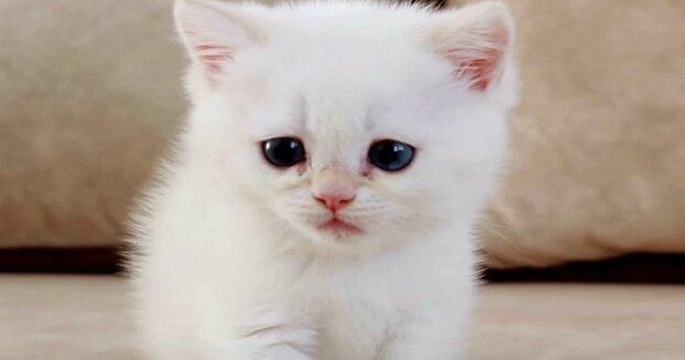 Screenshot: YouTube / Teddy Kittens