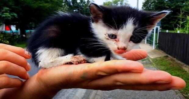 Screenshot: YouTube / Dog Rescue Shelter Mladenovac, Serbia
