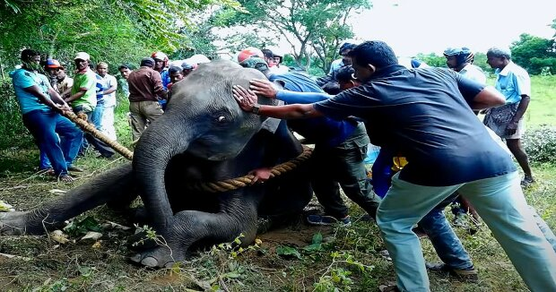 Screenshot: YouTube / THE WILD ELEPHANT