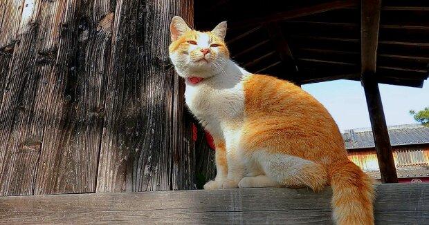 Screenshot: YouTube / Catastic meow