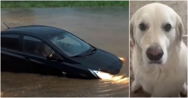 Screenshot: YouTube /  Sergey322 / Animal and Pet World