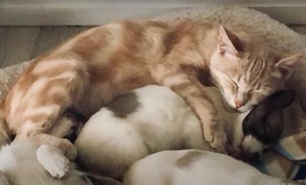 Screenshot: YouTube / Stories of Animals