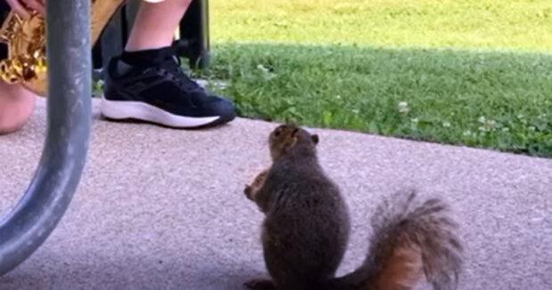 Screenshot: YouTube / Cute & Furry Animals