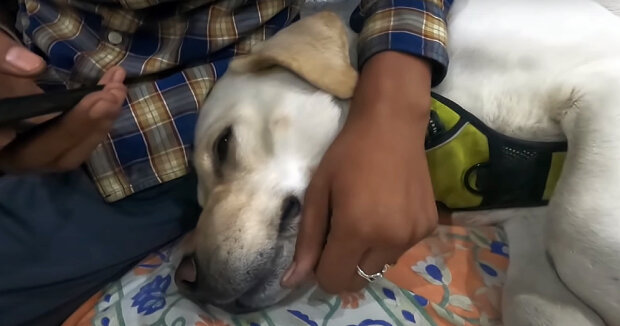 Screenshot: YouTube / SuperMax The Labrador