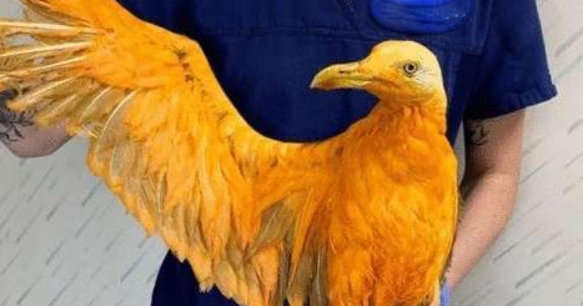 Leute fanden einen gelben Vogel auf der Straße und